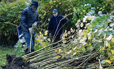 Freiwilligen-Aktion-In-Putbus-erwacht-der-Park-im-Herbst_U_Driest