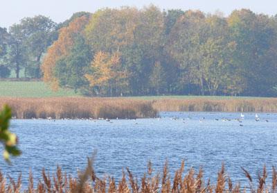 Wasservoegel_Wreecher-See