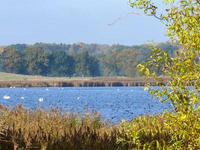 Wreecher-See_Wasservogelrast