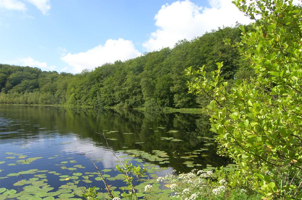 Schwarzer See in der Granitz